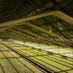 11 150x150 Systemy szklarnowe w Marslev