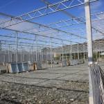 147 150x150 System szklarniowe w Bergen
