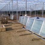 21 150x150 Systemy szklarniowe w Sonderso
