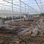 30 150x150 Systemy szklarniowe w Sonderso