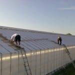 37 150x150 Systemy szklarniowe w Odense Stige