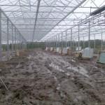 41 150x150 Systemy szklarniowe w Sonderso