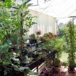 GreenHouse Helios Victorian 011 150x150 Victorian