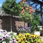 GreenHouse Oranzerie Professional 047 150x150 Orangerie Professional