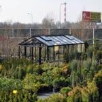 DSC 0639 1 150x150 Szklarnia ogrodowa w Poznaniu, woj. wielkopolskie