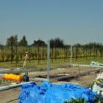 DSC 1263 150x150 Szklarnia ogrodowa w Różnowie