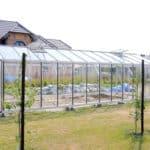 DSC 1300 150x150 Szklarnia ogrodowa w Różnowie