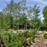 2 1 150x150 Szklarnia ogrodowa w Bystrzycy Kłodzkiej