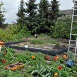 DSC 0377 150x150 Szklarnia ogrodowa w Sędziejowicach