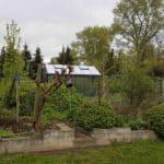 DSC 0472 150x150 Szklarnia ogrodowa w Sędziejowicach