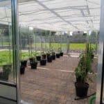 01 20 150x150 Szklarnia ogrodowa Rędziny
