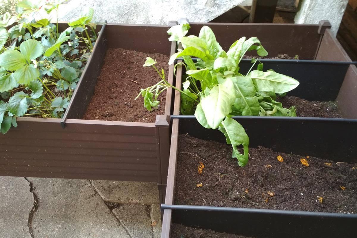 gleba do uprawy roslin Uprawa warzyw w szklarni ogrodowej