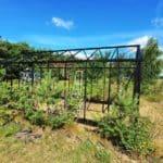image003 10 150x150 Szklarnia ogrodowa Kołomąt